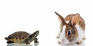 tortise and hare
